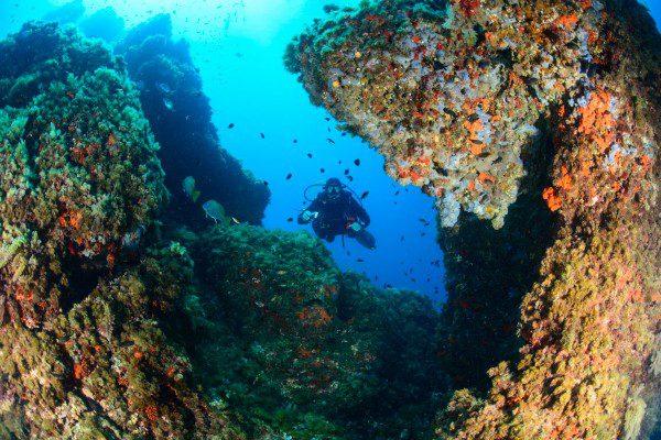 scuba dado diving