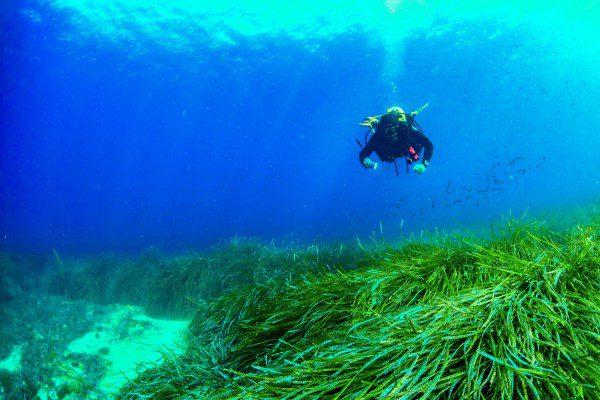 scuba diving posidonia
