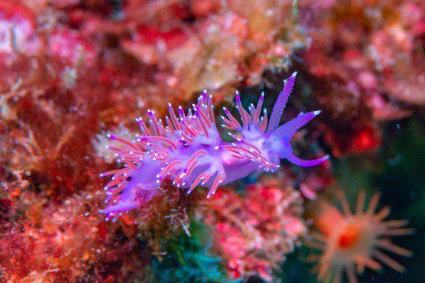 scuba ibiza life under the sea